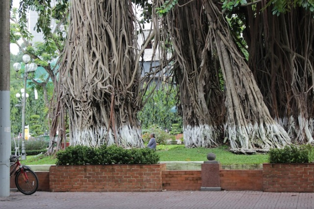 Across from the City Museum, a grandmother sits at the base of ancient banyan trees, quietly contemplating the city.
