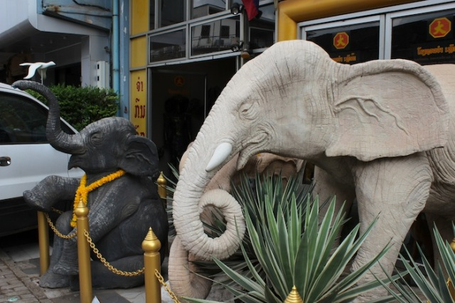 Chancing upon white elephants in Vientiane.