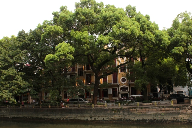 View across the canal to Shameen Island, shrouded by towering, 100-year old Camphor trees.