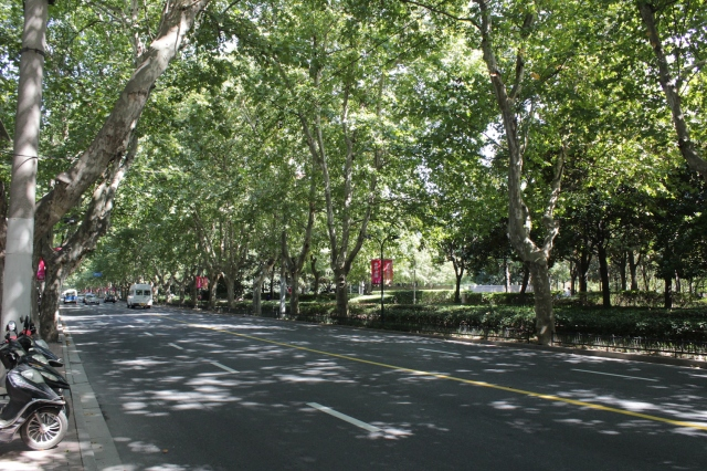 "Xujiahui park was ""reclaimed"" from a former industrial estate that then became the centre of Shanghai's recording industry (Pathe and EMI were separately here).  The leafy, plane-tree-lined boulevard is typical of the French Concession."