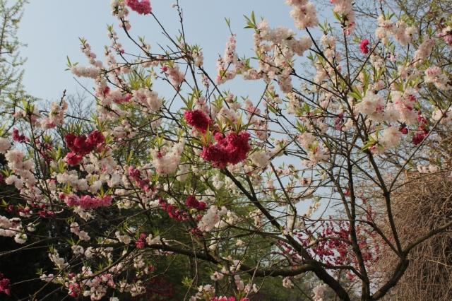 14 - Flowers
