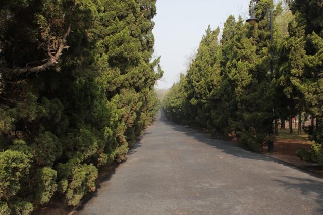 20 - Evergreens
