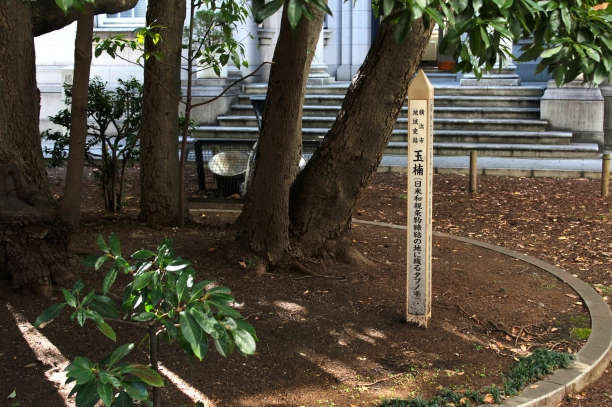 The Treaty of Amity was signed under this Tabunoki, or Camphor Tree in 1854.  (The original tree actually burnt down during the 1923 Great Kanto Earthquake but it sprouted a new tree which was saved and replanted here in the grounds of the Former British Consulate.)