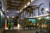Interior of the Indian Museum on Chowringhee. Note the whalebone.
