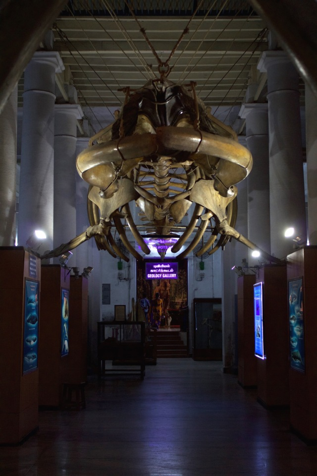 15 - Whalebone Museum