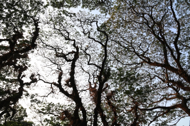 31 - Tree
