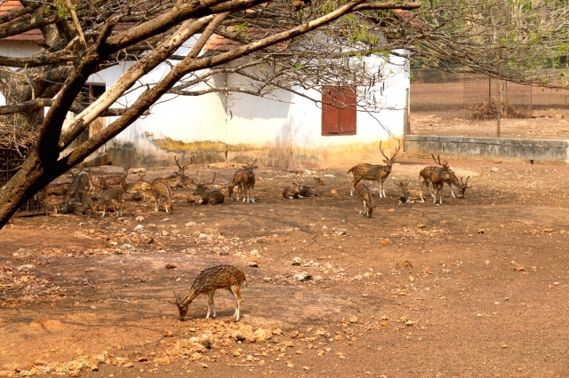 36 - Deer