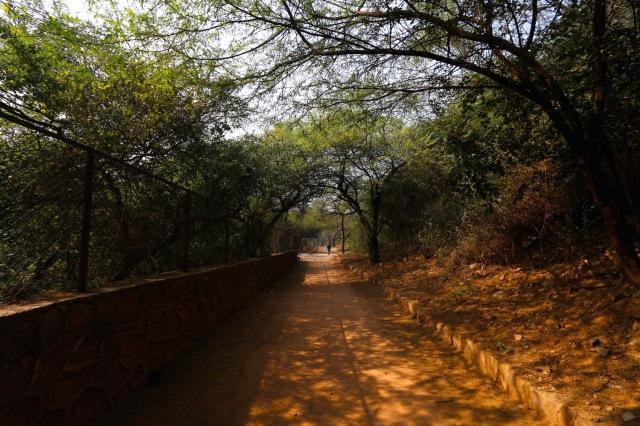 21 - Forest Walk