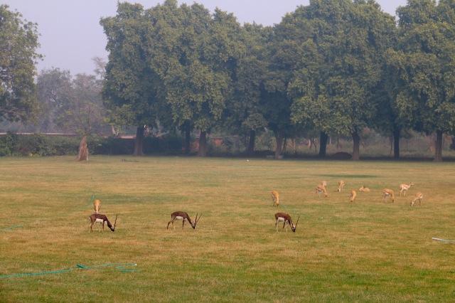 18 - Deer Park